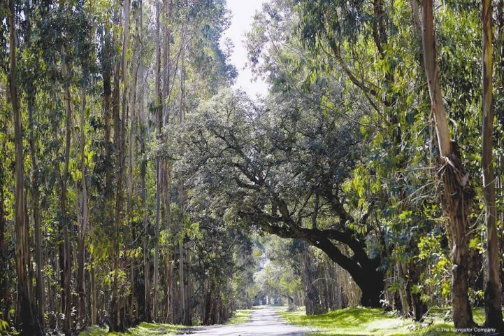 Sustainable forest management by The Navigator Company